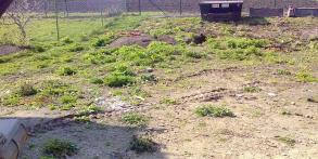 Zahrady snů Daniel Purgert, altán s palmami, realizace zahrad autorské zahrady ORIGINAL GARDEN